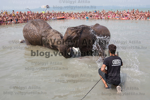 Rene Caselly Jr. of Germany splashes water on circus elephants of the Caselly Family as they take a bath in lake Balaton in promotion of the Circus Night event at Balatonlelle (about 140 km South-West of capital city Budapest), Hungary on July 18, 2015. ATTILA VOLGYI