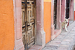 A colorful city of elegant colonial architecture, San Miguel de Allende is a World Heritage Site. Dogs sit at ornately carved courtyard doors and bark at passersby from balustraded balconies. Guanajuato, Mexico