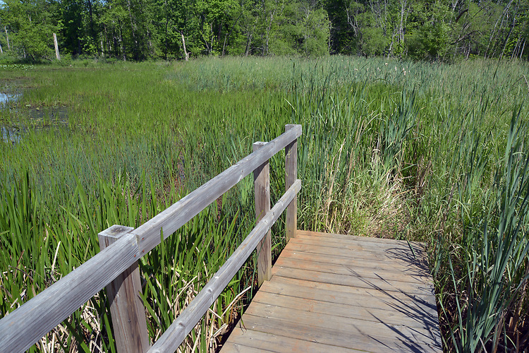 Vandalism damage to the railing around the boardwalk in the Esopus Bend Nature Preserve in Saugerties, NY, on Wednesday, June 14, 2017. Photo by Jim Peppler. Copyright/Jim Peppler-2017.