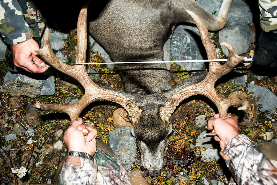 A mule deer antler is measured after a kill while hunting with Outdoor Life Editor Andrew McKean, Mike Stock, and guide Greg Kriese with Trefren Outfitters on Greyback Ridge in the Hoeback Drainage of Wyoming Region H, outside of Alpine, Wyoming, Monday, September 21, 2015. <br /> <br /> Photo by Matt Nager