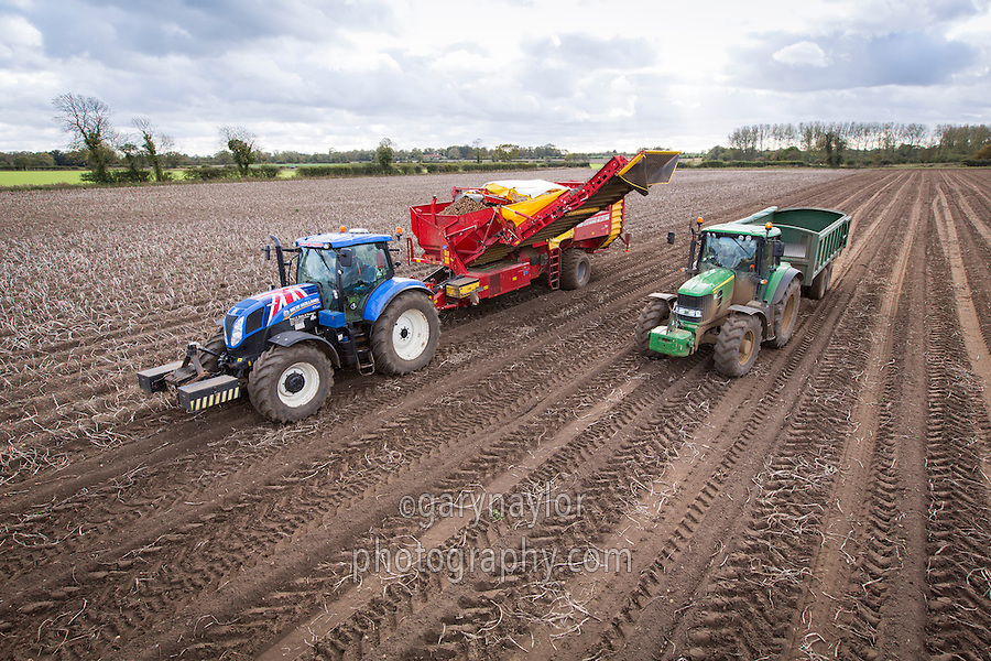 Harvesting Maris Piper potatoes for processing with a Grimme SV 260 trailed harvester - November, Norfolk