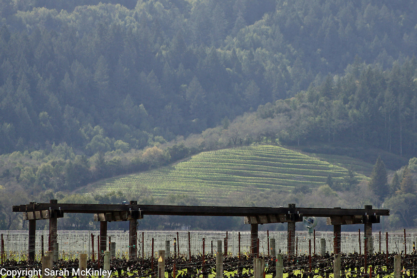A view of the hills overlooking Mondavi Vineyard outside of Napa in Napa County in Northern California.