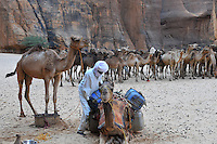Herdsmen taking their camels to the Guelta for drinking