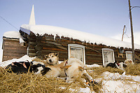 Ramey Smyth's dogs rest in front of the Ruby Bible Church on Friday