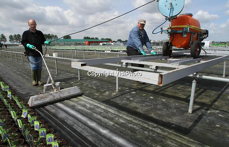 Foto: VidiPhoto..BEMMEL - Personeel van werkvoorzieningschap Presikhaaf Kwekerij in het kassengebied Bergerden bij Bemmel, ontsmet dinsdag de plek waar zojuist lavendel is geraapt. Om algen- en mosgroei te voorkomen worden direct na de oogst de 'bedden' ontsmet en schoongemaakt met een biologisch middel. Volgens een woordvoerder van Presikhaaf is dit de enige sociale werkplaats in Nederland waar zo schoon wordt gewerkt..
