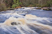 Little River flowing through Rolesville Millpond Natural Area, Rolesville, North Carolina, USA
