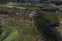 aerial photograph of an orchard in the mountains of Santa Barbara County, California