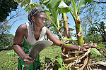 Ana Mario prunes banana plants in a church-supported community garden at Napkasiki, South Sudan. The project is a joint project of the Roman Catholic diocese of Tombura-Yambio and Caritas Austria, and helps families displaced by attacks from the Lord's Resistance Army to get restarted on land they once fled. They grow vegetables and fruit for their own consumption as well as to sell in nearby markets for cash, which they use to pay for medicines and school fees.