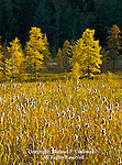 Cattail and Tamarck Marsh, Adirondack Mountains, New York