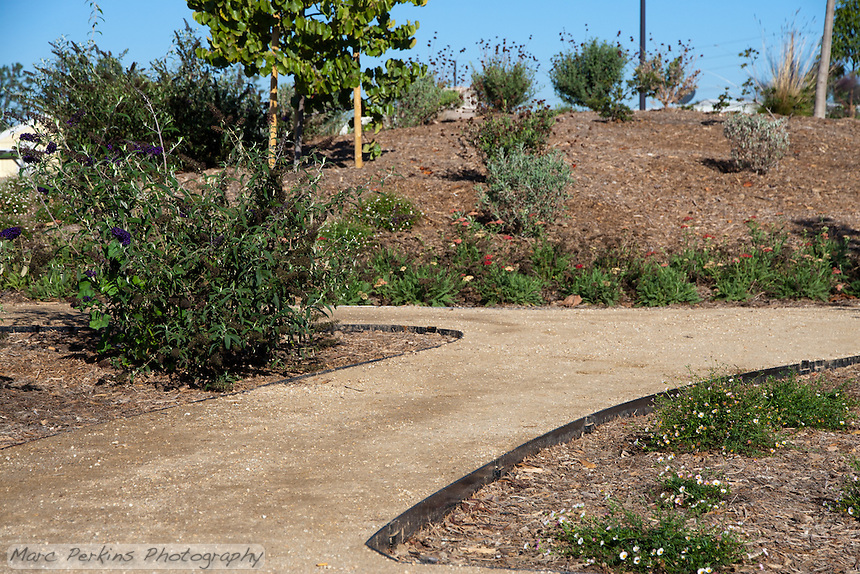 The small hill in the butterfly garden at Stanton Central Park is visible behind the decomposed granite pathway winding around the plantings.
