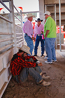 Usa,Wyoming, Cheyenne, rider cowboy concentrate to the competitiion  at Frontier days 2017