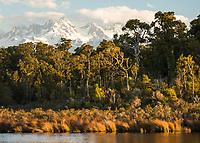 Coastal native forest at Gillespies Lagoon with Southern Alps in clouds, Westland Tai Poutini National Park, South Westland, UNESCO World Heritage Area, New Zealand, NZ
