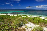 white sandy beach with coral reef, Laysan, Papahanaumokuakea Marine National Monument, Northwestern Hawaiian Islands, Hawaii, USA, Pacific Ocean