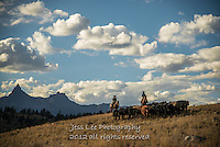 Autum round up Cowboys working and playing. Cowboy Cowboy Photo Cowboy, Cowboy and Cowgirl photographs of western ranches working with horses and cattle by western cowboy photographer Jess Lee. Photographing ranches big and small in Wyoming,Montana,Idaho,Oregon,Colorado,Nevada,Arizona,Utah,New Mexico.