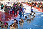Lisbet Norris starting Iditarod 2014 with Siberian Huskies team, Willow, Southcentral Alaska, Winter.