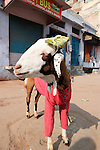 Goat Dressed in Clothes-Bazaar in Taj Ganj, Agra