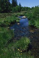 Europe/France/Limousin/Corrèze/Plateau de Millevaches/Env de Meymac : Rivière