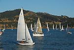 sailing Tiburon, Angel Island