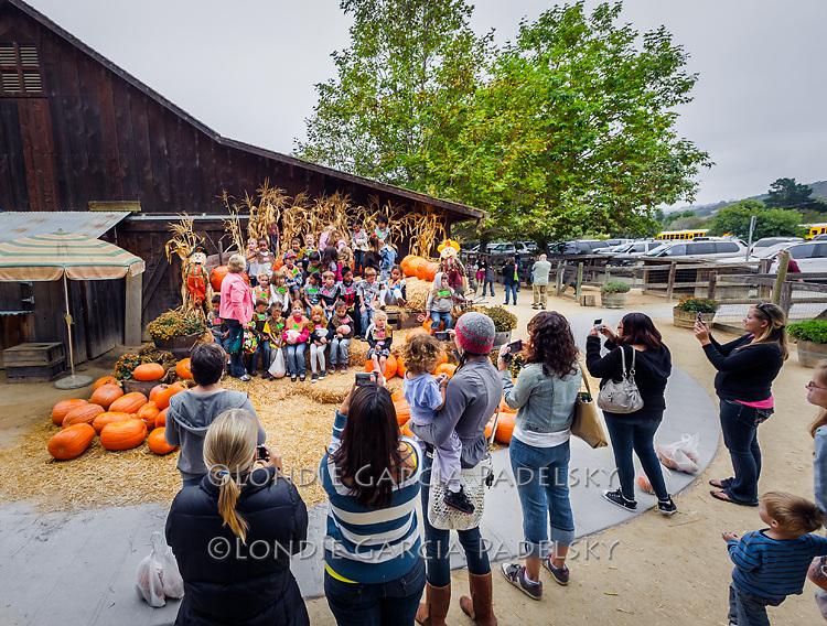 School field trip during pumpkin season at Avila Valley Barn, Central Coast, California