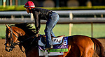 October 28, 2019 : Breeders' Cup Mile entrant True Valour, trained by Simon Callaghan, exercises in preparation for the Breeders' Cup World Championships at Santa Anita Park in Arcadia, California on October 28, 2019. Scott Serio/Eclipse Sportswire/Breeders' Cup/CSM