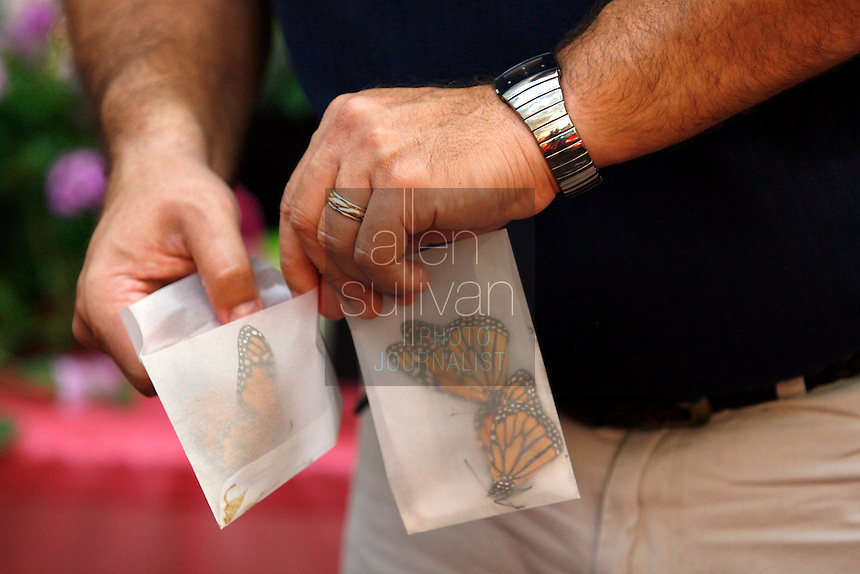 Unpacking butterflies from their shipping sleeves during the Margaritas and Monarchs Butterfly Festival preview event at the Dunwoody Nature Center on Friday evening, July 7, 2006. About 500 butterflies, from monarchs to question marks, were released into a butterfly tent full of flowers.