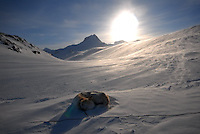 Sledgedog in snow,sledehund i snø,Suliskongen,