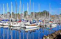 Sailboats in the Santa Cruz Harbor