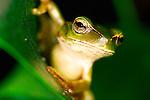 Animals-Amphibians