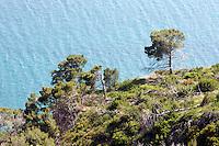 Una veduta della costa del Gargano, in Puglia.<br /> A view of the Gargano's coast, with pine trees, in Puglia.<br /> UPDATE IMAGES PRESS/Riccardo De Luca