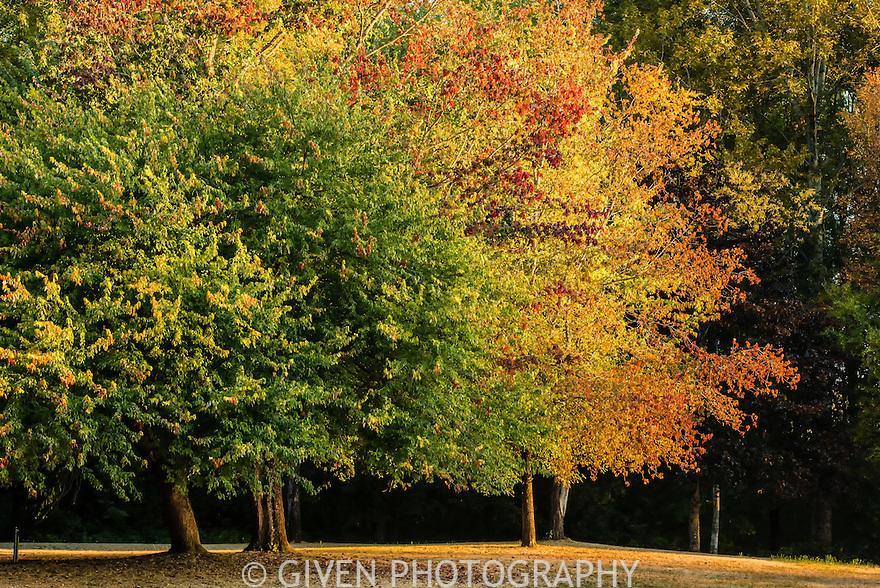 Autumn, Sammamish State OPark, Washington