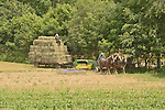 Amish men, baling hay with horse team.