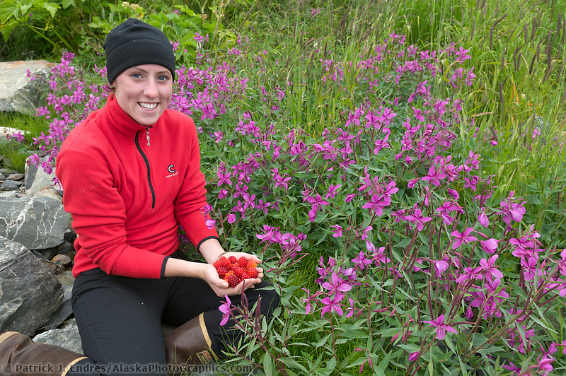 Lady holds a handful of salmonberries harvested from a plant amongst dwarf  fireweed, Western Prince William Sound, Alaska
