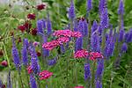 flowers in garden in Palmer