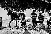 A boy walks a pure Arabian breed, named Rawnaq after a ride through the neighborhood of Essawiya on June 07, 2016 in East Jerusalem. <br /> Photo Daniel Berehulak for the New York Times