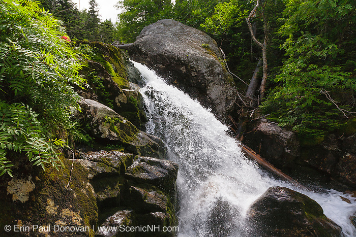 West Branch Peabody River which runs along the side of Great Gulf Trail  during the summer months. Located in the White Mountains, New Hampshire USA
