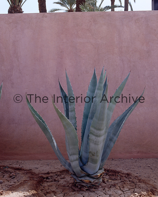 An agave plant stands out against the pale pink wall that surrounds the garden