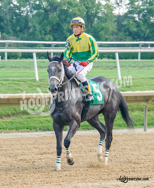 Divine Dawn winning at Delaware Park on 9/19/15