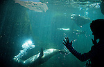 Silhouetted girl against aquarium glasswatching seals swim by