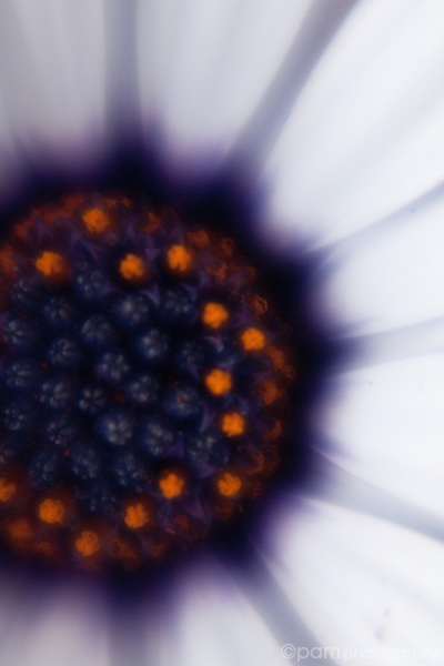 Close up abstract image of the inside of a daisy