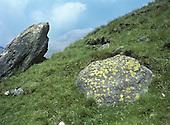 Map Lichen - Rhizocarpon geographicum