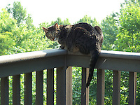 cats on a two story high deck