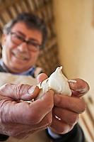 Europe/France/Midi-Pyrénées/82/Tarn-et-Garonne/Saint-Étienne-de-Tulmont: Le Chef Christian Constant épluche l'  Ail blanc de Lomagne  [Non destiné à un usage publicitaire - Not intended for an advertising use]