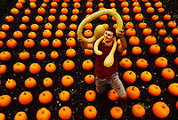 Colourful autumn Harvest at Forde Abbey.<br /> <br /> Kitchen Gardener, Olly Hone admires one of newly picked summer squashes.<br /> <br /> Colourful pumpkins, squashes and gourds at the Forde Abbey Monastery on the Dorset/Somerest boarder.<br /> <br /> Forde Abbey is a former Cistercian monastery dating back to the early 12th century