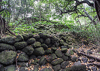 Rock wall of the Ili'ili'opae Heiau, Moloka'i