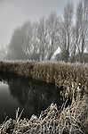Misty morning with reeds beside a deep pond in Eye, Suffolk, England