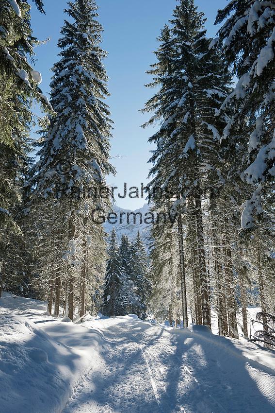 Oesterreich, Salzburger Land, Pongau, bei Obertauern: Winterwanderweg im Skilanglaufgebiet rund um die Gnadenalm | Austria, Salzburger Land, Pongau, near Obertauern: winter footpath through cross-country ski area at Gnadenalm