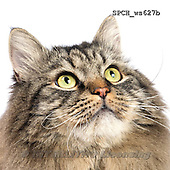 Xavier, ANIMALS, REALISTISCHE TIERE, ANIMALES REALISTICOS, FONDLESS, photos+++++,SPCHWS627B,#A#