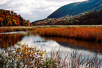 WETLANDS<br /> Tidal wetlands<br /> Iona Island, NY