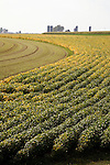 Farm and field agriculture in southeast Minnesota USA