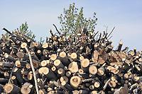 - Abbiategrasso (Mi), impianto per lo sfruttamento di biomasse (legname di scarto) per la produzione di energia elettrica, acqua calda per il teleriscaldamento e pellets (combustibile ecologico);....- Abbiategrasso (Mi) plant for exploitation of biomass (wood waste)  to produce electricity, hot water for district heating and pellets (ecological fuel)